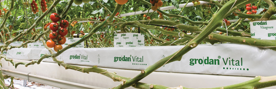 Growing media - courtesy of grodan