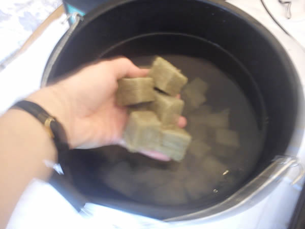 soaking rockwool starter cubes in nutrient solution ready for germination of tomato seeds